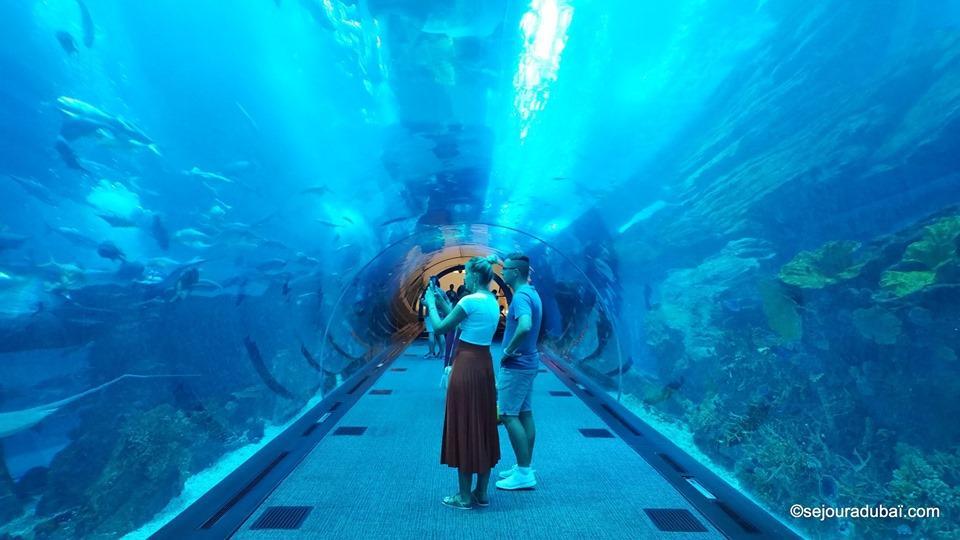 Dubaï aquarium & underwater zoo