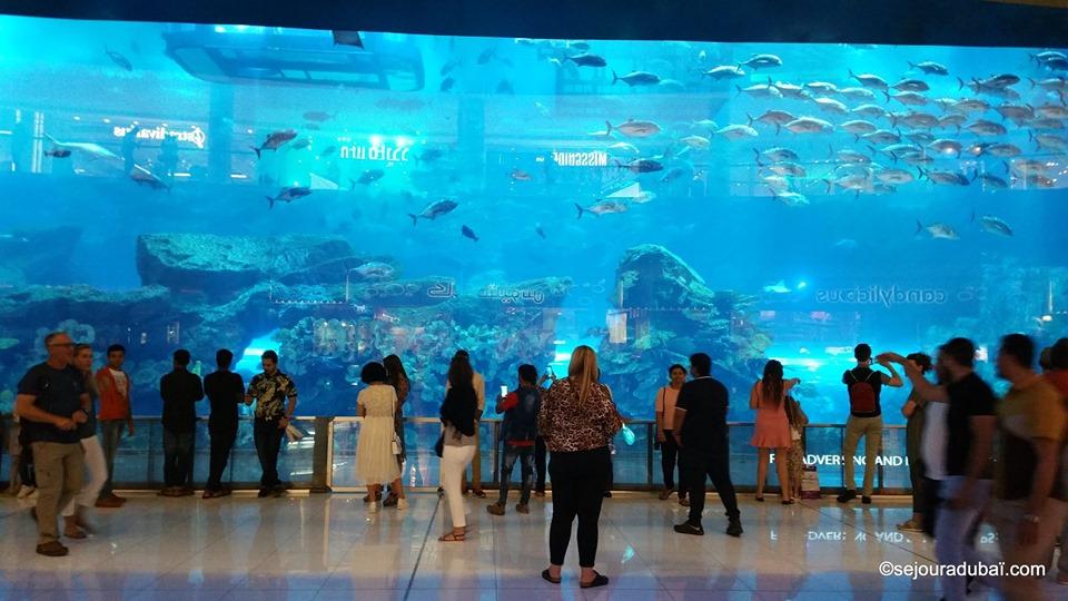 Dubaï aquarium underwater zoo